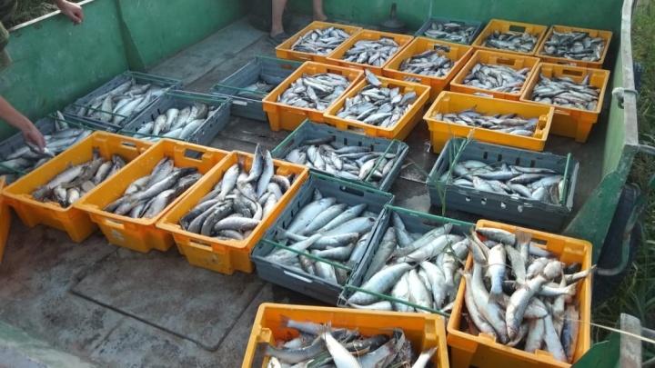 Из Таганрогского залива браконьер выловил рыбы на 4 миллиона рублей