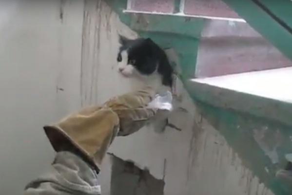 Чтобы вызволить кота из западни, спасателям пришлось бензорезом распилить стену под лестницей