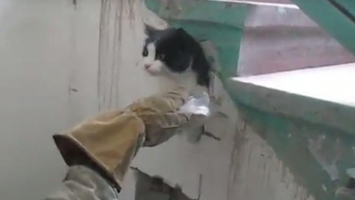 Видео: спасатели разрушили стену, чтобы спасти замурованного кота