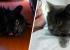 Посмотрите, какой красавец! Котика, которого спасли в пожаре на Вайнера, выписали из клиники