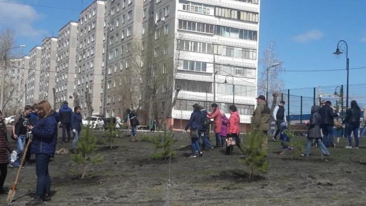 Посадил — отвечаешь: в Ленинском районе началась операция «Сосна»