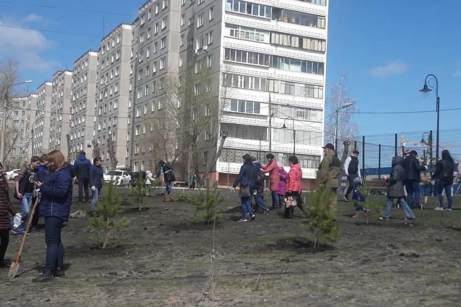 В Ленинском районе начали высаживать сосны