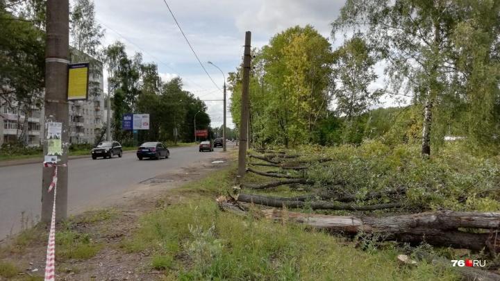 В Ярославле ради дороги повырубали деревья: ответ властей