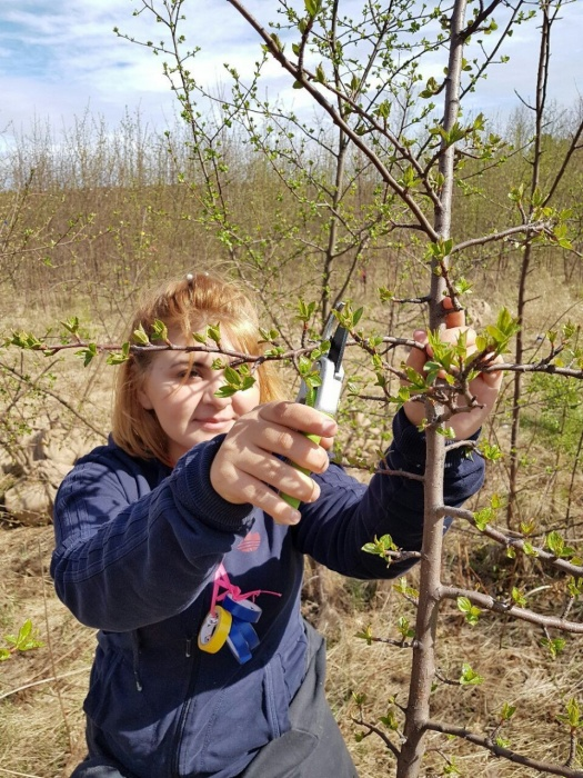 Истинные уральские яблони —сорта выведены нашими селекционерами