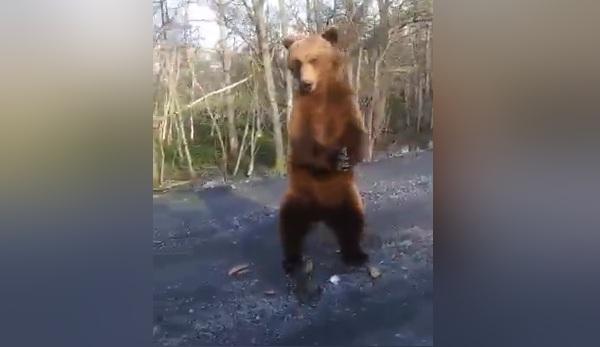 Расчувствовавшаяся женщина прикормила медведя на трассе и получила от него жест благодарности