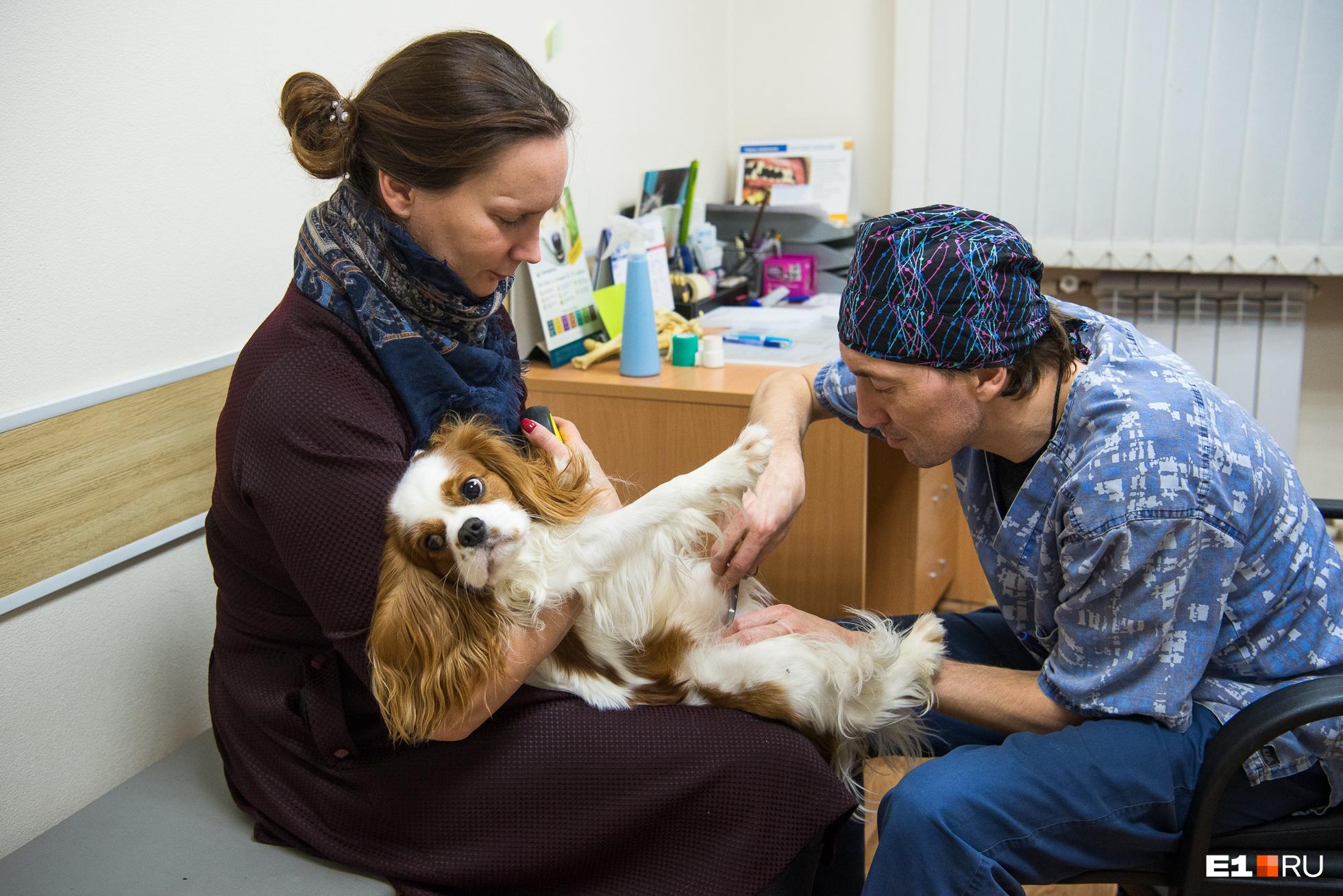 Вячеслав Тебеньков снимает швы собаке