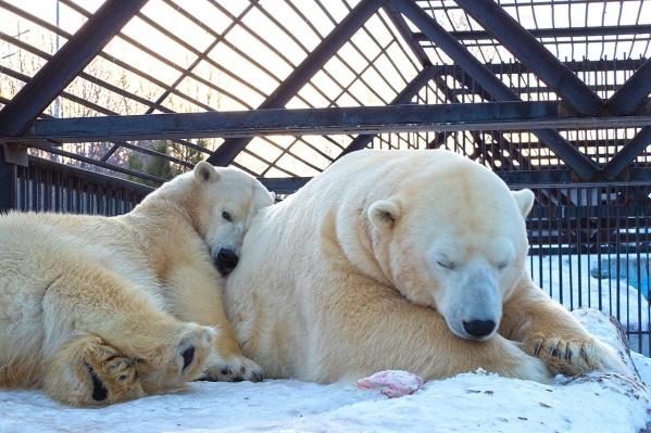 Почти все медведи сейчас проснулись