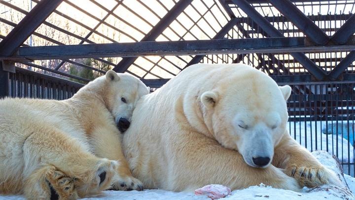 Дети делали бутерброды из хлеба, ягод, орехов и кормили медведей в зоопарке