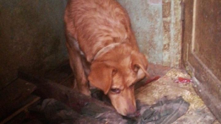 «С ними расправились самым жестоким образом»: после смерти волгоградца неизвестные истребили десятки его собак