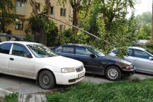 На Старой Сортировке ветка упала на автомобиль