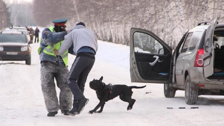 В Омске собак учили набрасываться на людей в жилетах ДПС