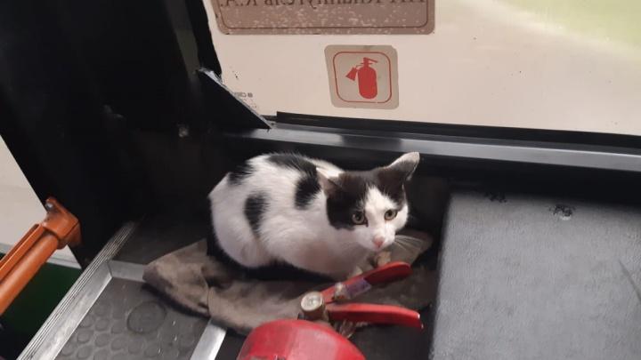 Грустный кот забрался в автобус в «Черемушках» и ездит вместе с экипажем в рейсы