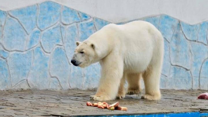 Приехавший из Ижевска медведь завёл в Ростове вторую семью