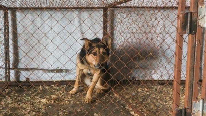 «Я за отстрел»: Чиновники и депутаты признали неэффективность стерилизации бездомных собак
