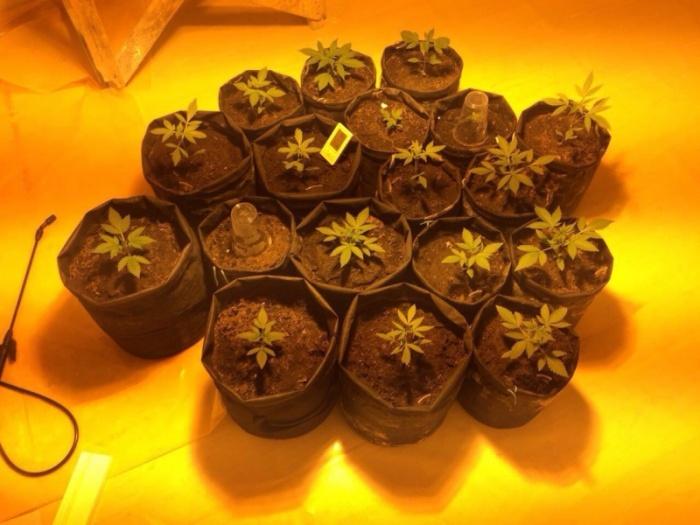 Новосибирцы создали конопле комфортные условия для роста