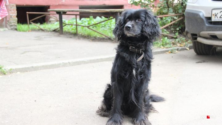 «Бедный собакен»: реакция соцсетей на нападение пса на девочку