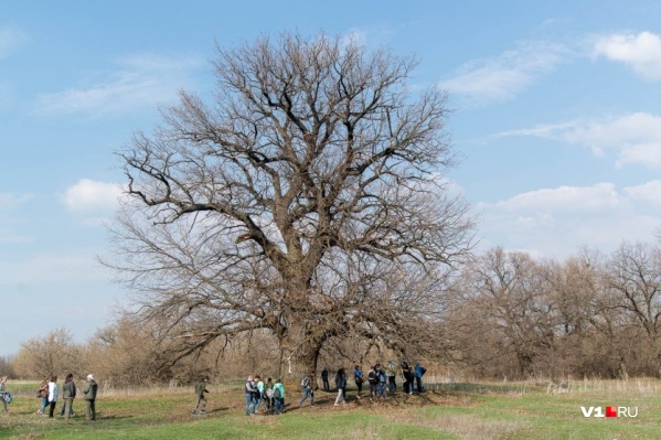 Дереву требуется постоянный уход