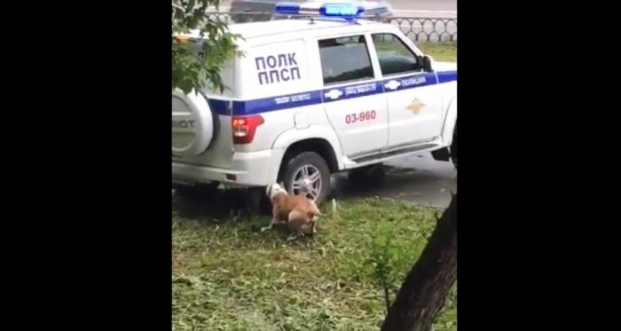 Хозяин собаки спал пьяный рядом, когда его питомца застрелили полицейские
