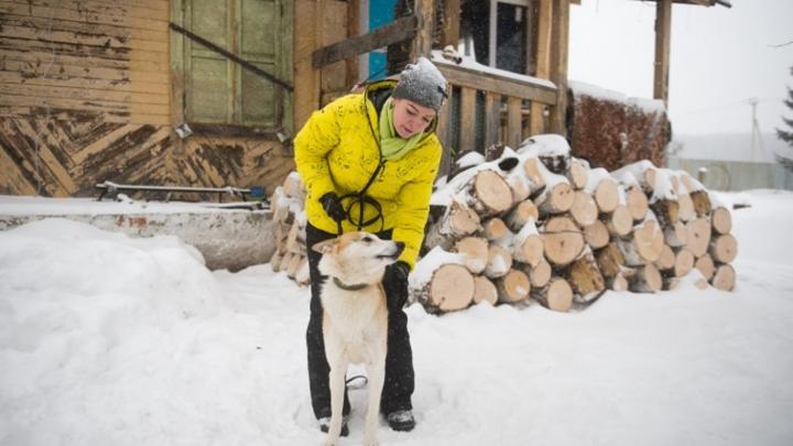 У кинолога Кольцовской таможни пропала собака. Мошенники требуют за нее деньги