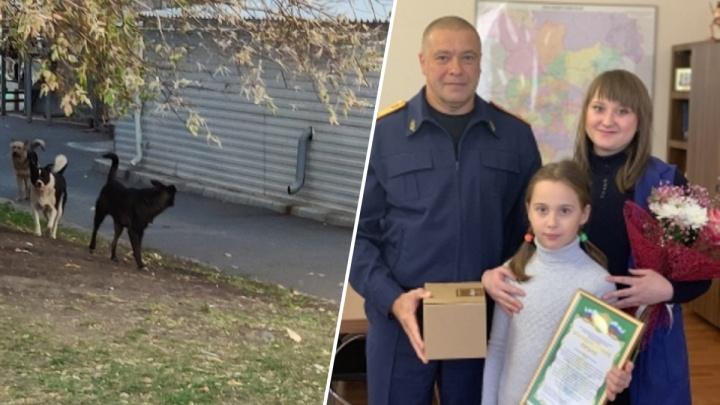 Продавец отбила ребенка от бродячих собак на улице и получила благодарность от СК