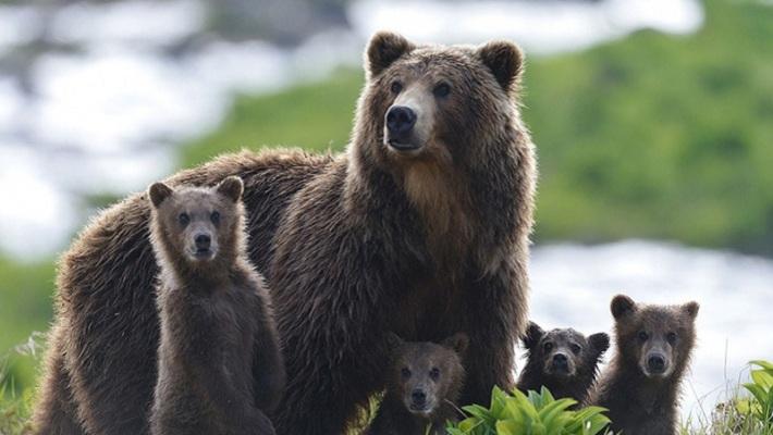 Пермячка номинирована на премию «Золотой орел» за фильм «Медведи Камчатки. Начало жизни»