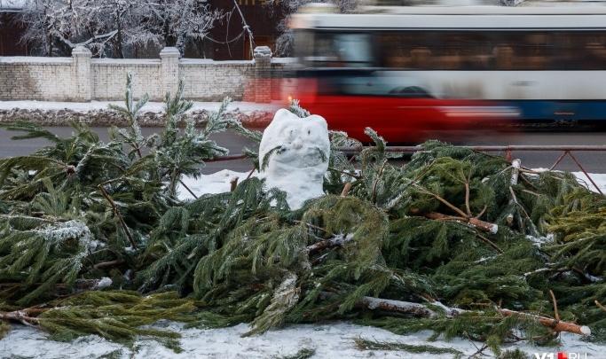 Наигрались — несите на помойку: Волгоград опять остался без цивилизованного сбора елок
