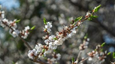 Цветущий май: смотрим на весеннюю красоту омской природы