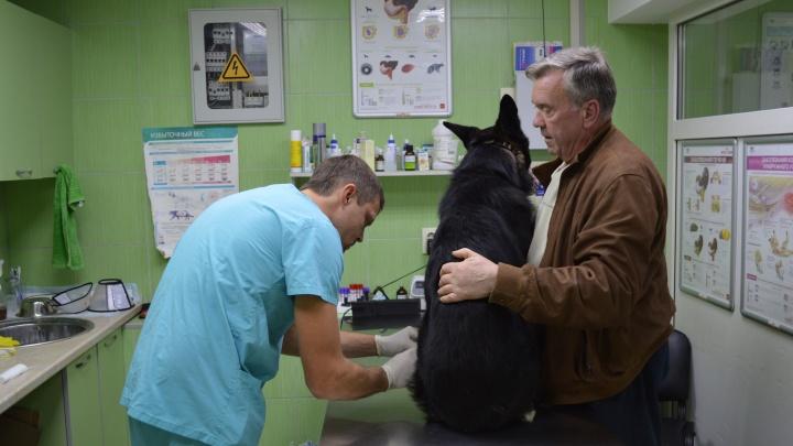 Мужчины и котики, или Дневник ночной ветеринарки