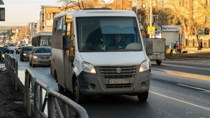 В Перми появится автобусный маршрут, который соединит Березовую рощу и улицу Попова