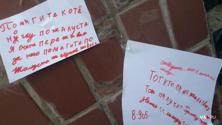 «Молодец, ты крутой»: волгоградская девочка спасает сироту-котёнка душераздирающими объявлениями