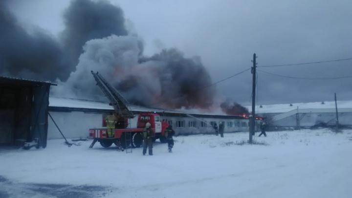 В Нижнем Тагиле загорелась птицефабрика. На месте развернули штаб