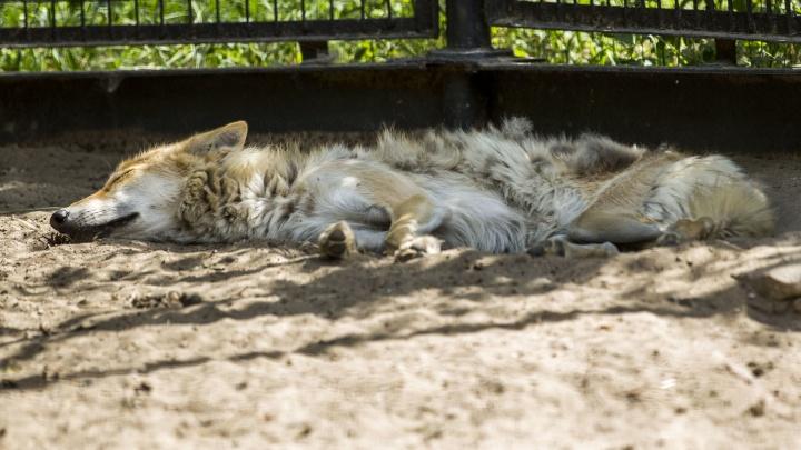 Новосибирский зоопарк изменил график работы