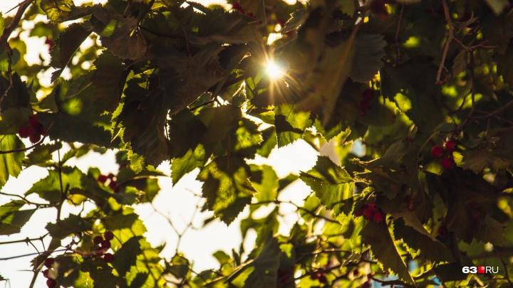 Жителям Самарской области запретили пикники в лесах из-за жары