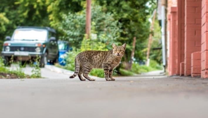 В Сызранском районе бешеный кот покусал мальчика