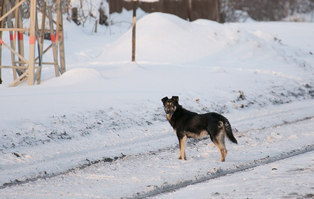 В одном из районов Уфы поймали 209 бездомных собак