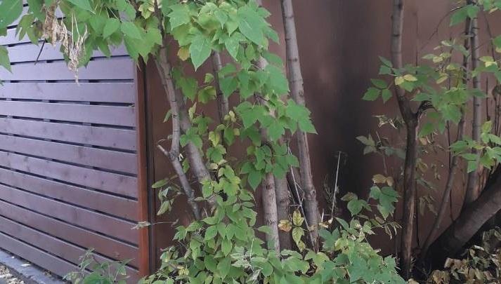 Неадекватный мужчина облил павильон на Менжинского бензином и поджег