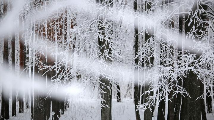 Мороз и солнце, день чудесный: синоптики рассказали о погоде на предпраздничные выходные