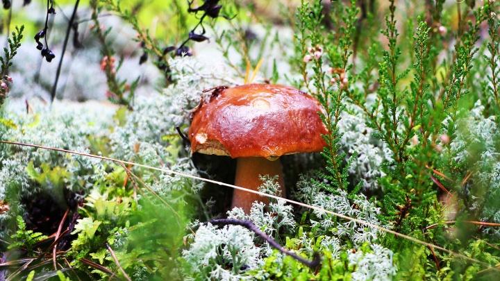 Лес закрыт, кабанов отстреливают: сбор грибов и ягод ограничили в Вадском районе