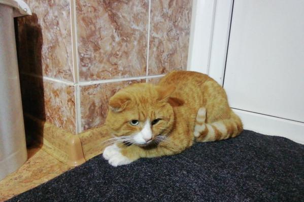 Оказалось, что кота зовут Мартин