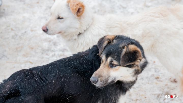В Сызрани собака укусила трехлетнего ребенка