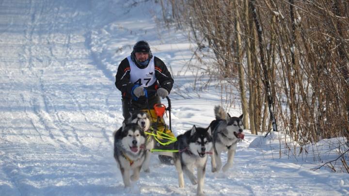 Гонки на собаках, День влюбленных и концерт «Сплин»: афиша на неделю в Перми