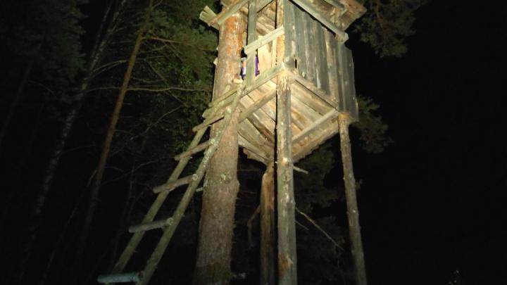 Спрятались на дереве: ночью под Семеновом спасли двух заблудившихся грибников