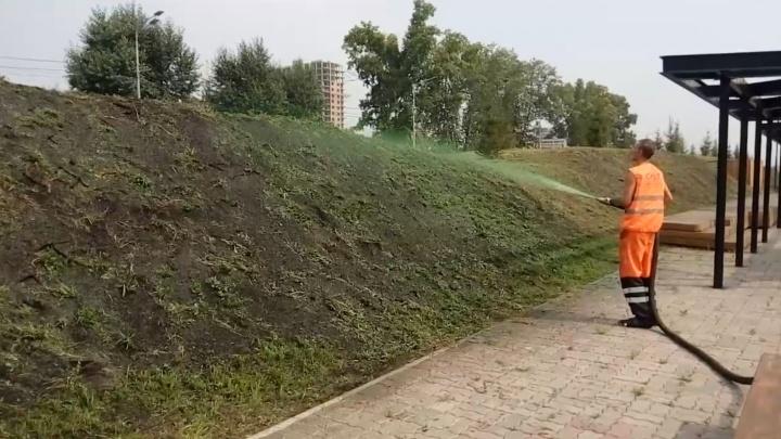 В сквере Универсиады покрасили газоны: смотрим на необычный способ посева