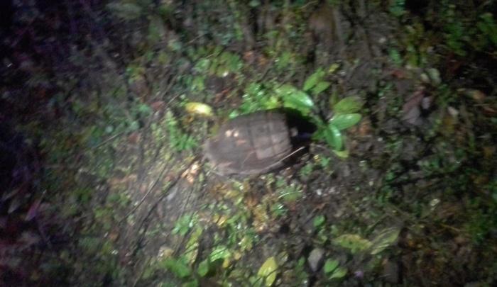 На Дне города Лесосибирска потеряли ручные гранаты
