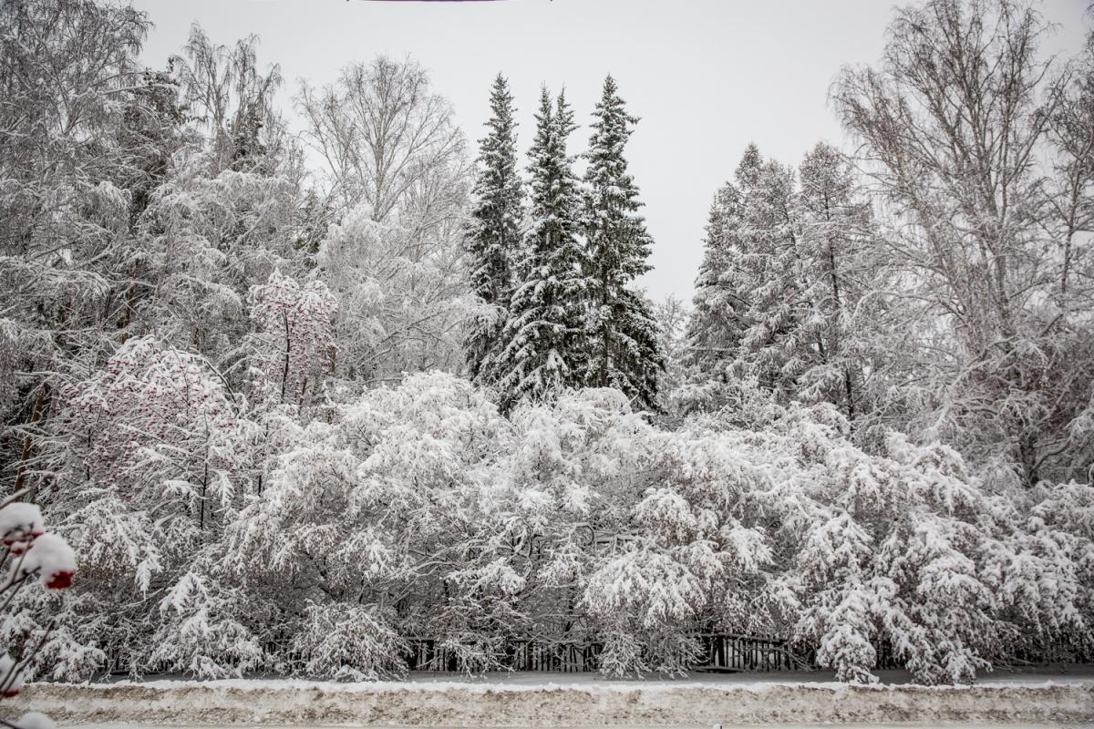 давно снежный новосибирск фото красоты, просто фото