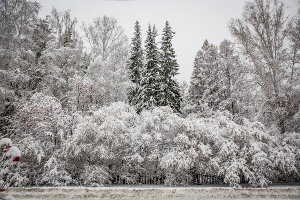 Новосибирцы сравнивают город со сказкой и выкладывают фотографии с занесёнными снегом деревьями