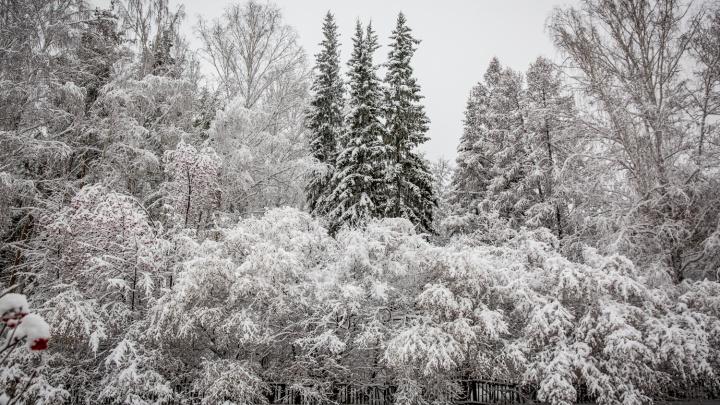 Сказка на улицах: Новосибирск завалило очень пушистым снегом