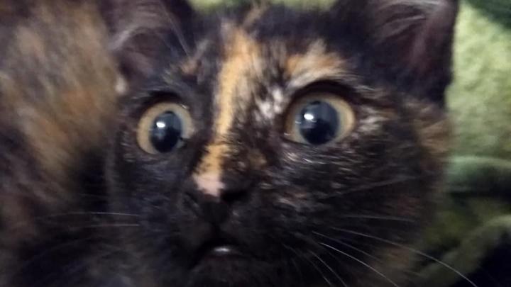 «Бездомыши ищут тепло»: красноярцы погнули машину на парковке ради спасения котёнка в капоте