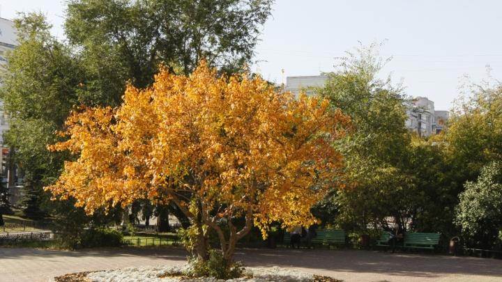 Включили отопление — ждите потепления: на Челябинск надвигается осенняя жара