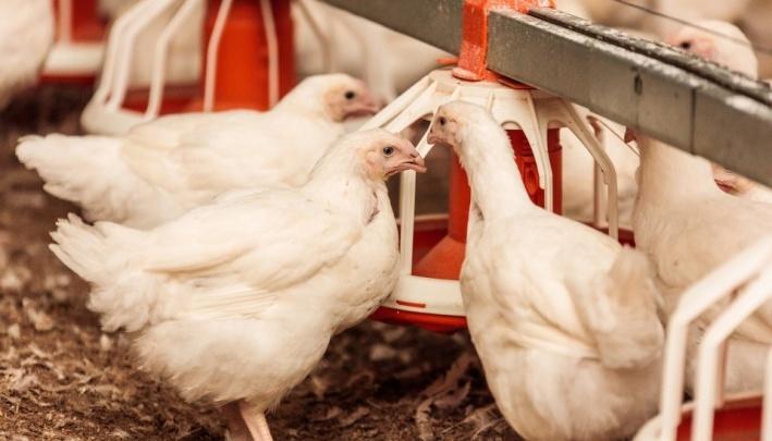 Южноуральская птицефабрика ответила на претензии прокуратуры к свалкам помёта
